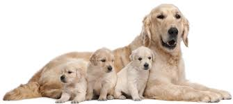 Offering the best products for your families pets and animals